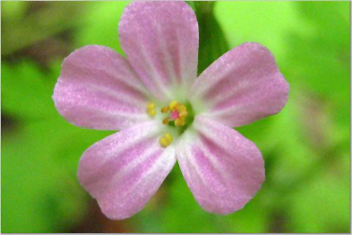 flower54642
